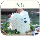 pet ceremonies